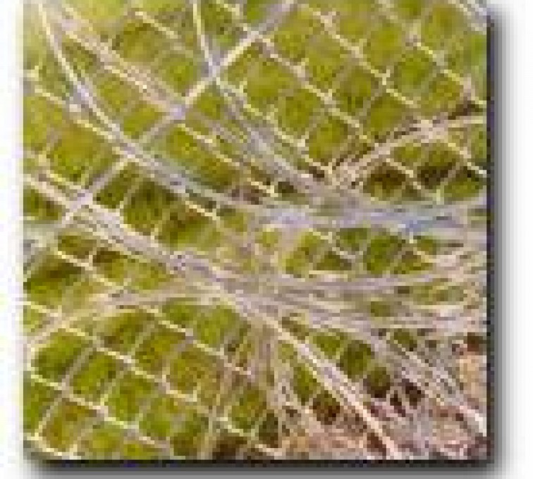 AFC Sioux City - Closeup of concertina wire