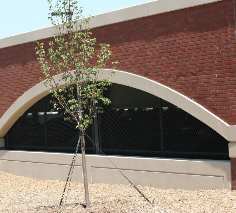AFC Sioux City - Chain link parking garage window